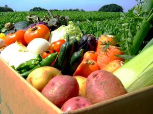 Экспорт российской сельхозпродукции может снизиться в 2020 году